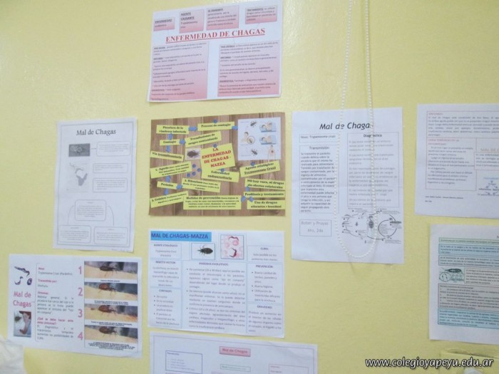 Enfermedad de Chagas 8