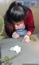 Adaptaciones de las plantas al ambiente acuático 1